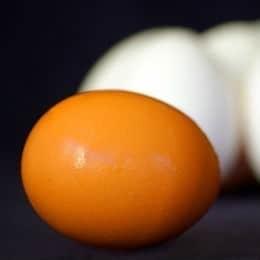 Egg Shampoo Recipe